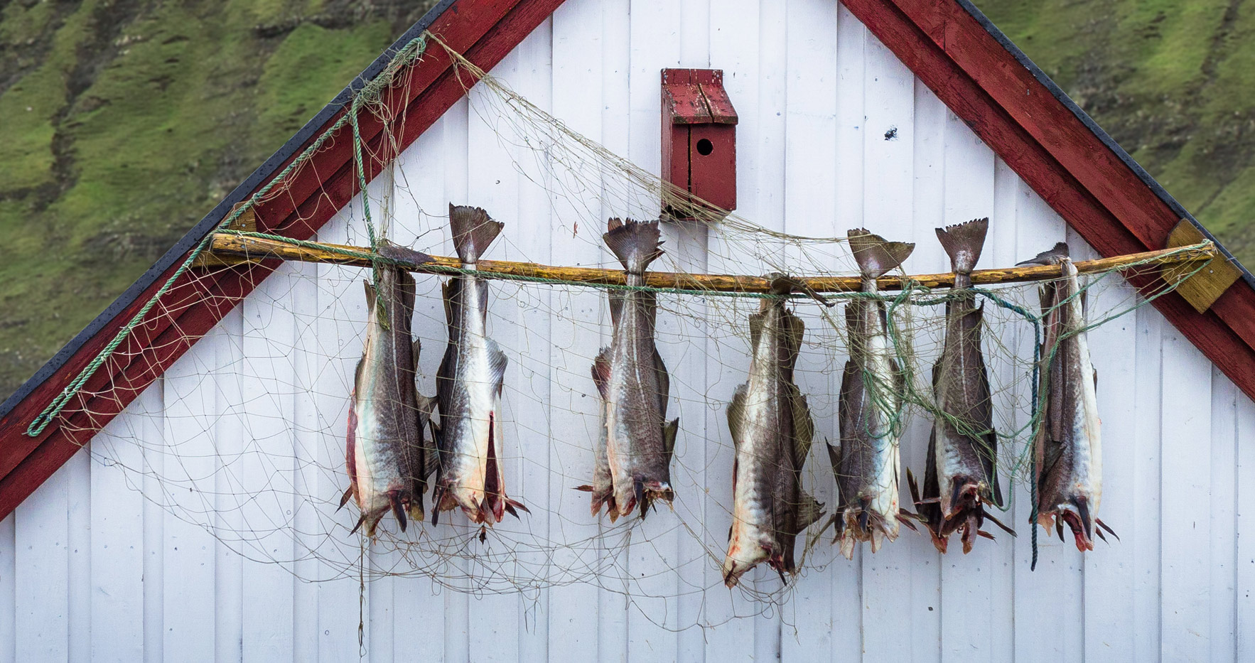 drying of fishes